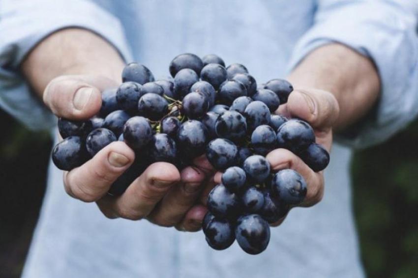 Mengenal Gaya Hidup Organik Sebagai Panutan Baru